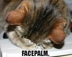 catfacepalm